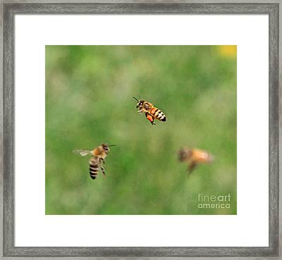 The Pollinater Framed Print by Robert Pearson