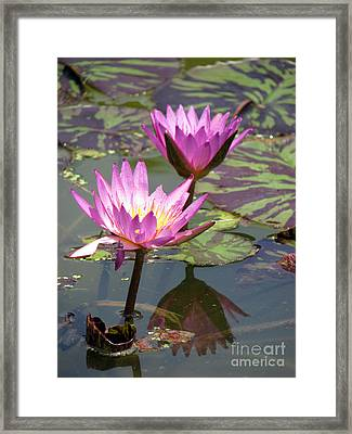 The Pond Framed Print by Amanda Barcon