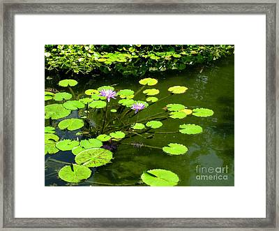 Framed Print featuring the photograph The Pond by Robert D McBain