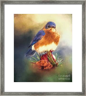 The Pondering Bluebird Framed Print