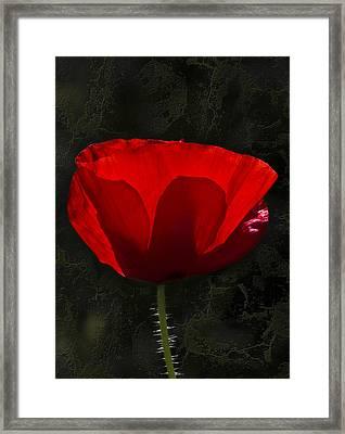 The Poppy Framed Print by Svetlana Sewell