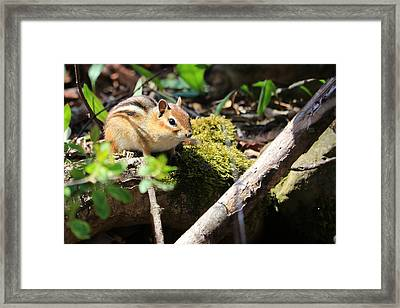 Framed Print featuring the photograph The Poser by Rick Morgan