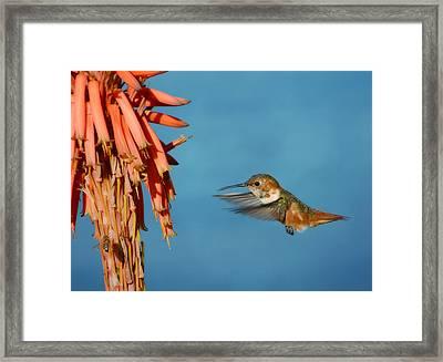 The Power Of Aloe Framed Print