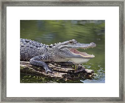 The Power Of Vulnerability  Framed Print by Betsy Knapp