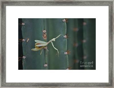 The Praying Mantis Framed Print by Donna Greene