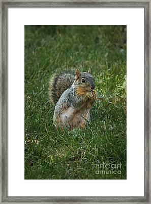 The Praying Squirrel Framed Print by Robert Bales