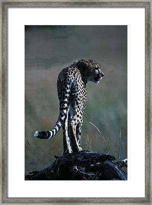 Framed Print featuring the photograph The Predator by Carl Purcell