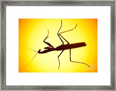 The Predator Framed Print by Charles Dobbs