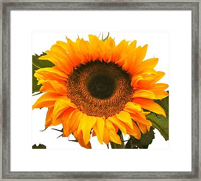 The Prettiest Sunflower Framed Print