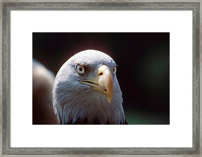 The Price Of Freedom Framed Print by Carl Purcell