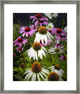 The Promise Of Spring Framed Print