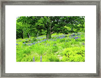 Framed Print featuring the photograph The Protector by Greg Fortier