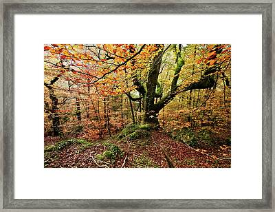 The Protector Framed Print by Jorge Maia