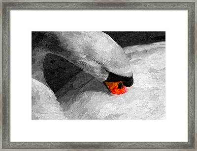 The Proud Swan Art Framed Print by David Pyatt