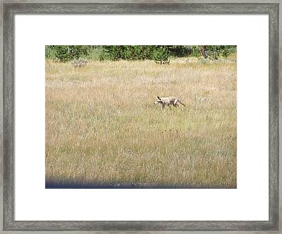 The Prowl Framed Print by Debbie Hall