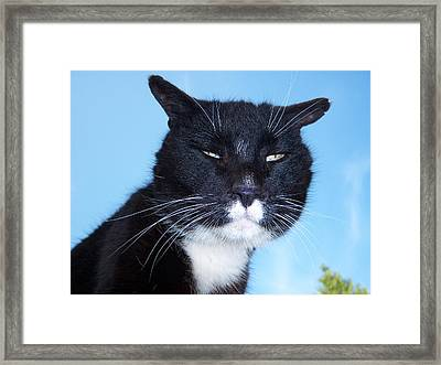The Puggy Look Framed Print by Ken Day