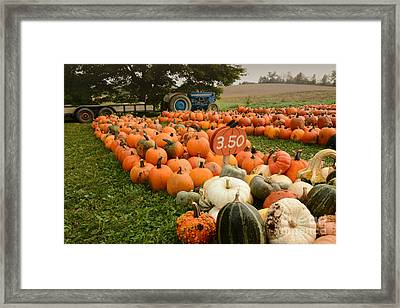 The Pumpkin Farm One Framed Print