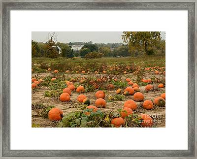 The Pumpkin Farm Two Framed Print