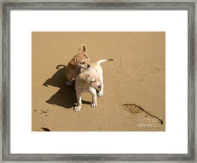 The Puppies Framed Print by Madeline Ellis
