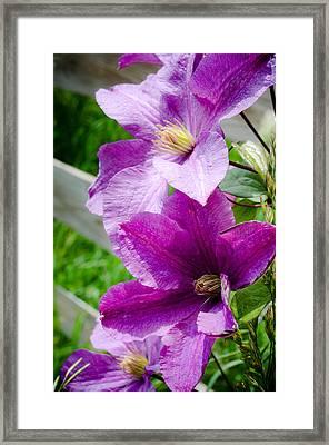 The Purple Flowers Framed Print