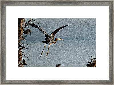 The Purple Heron Framed Print by Manjot Singh Sachdeva