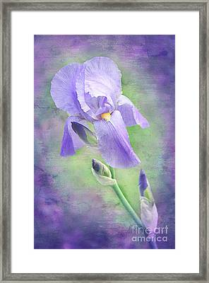 The Purple Iris Framed Print by Andee Design
