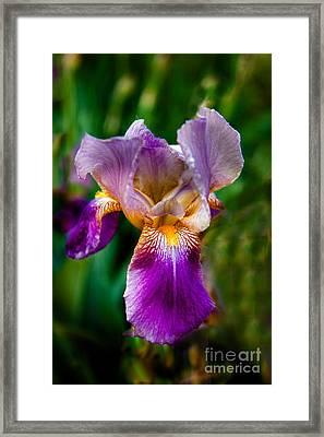 The Purple One Framed Print