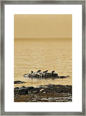 Framed Print featuring the photograph The Quatuor - Gold by Aimelle