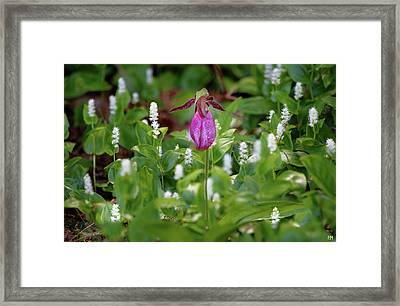 The Queen And Her Minions Framed Print