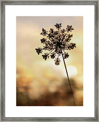 Framed Print featuring the photograph The Queen At Sunrise by Lori Deiter