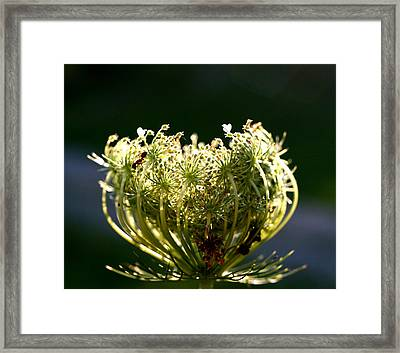 Framed Print featuring the photograph The Queen by Diane Merkle
