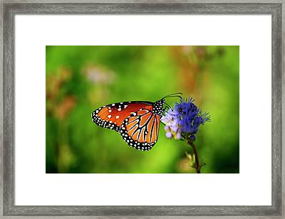 The Queen Is Here Framed Print