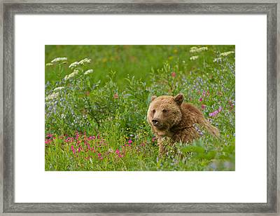 The Queen Of Dunraven Framed Print by Sandy Sisti