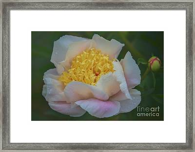 The Queen Of Flowers Framed Print
