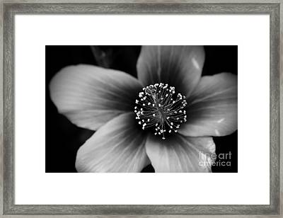 The Queen Of Heaven Framed Print by Sharon Mau