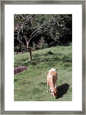 The Queen Of The Hills Framed Print by David Cardona