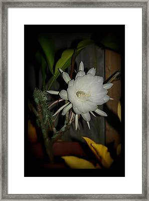 The Queen Of The Night Framed Print