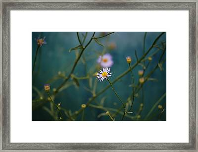 Framed Print featuring the photograph The Quiet Aster by Douglas MooreZart