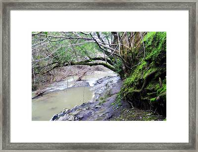 The Quiet Places Framed Print by Donna Blackhall