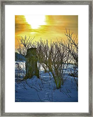 The Rabbit Trail Framed Print by Robert Pearson