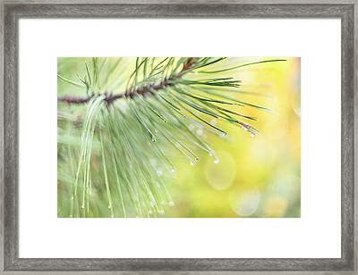 Framed Print featuring the photograph The Rain The Park And Other Things by John Poon