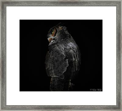 The Raptors, No. 11 Framed Print