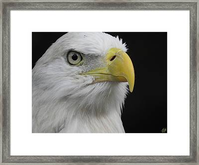 The Raptors, No. 56 Framed Print