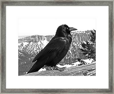 The Raven - Black And White Framed Print by Rona Black