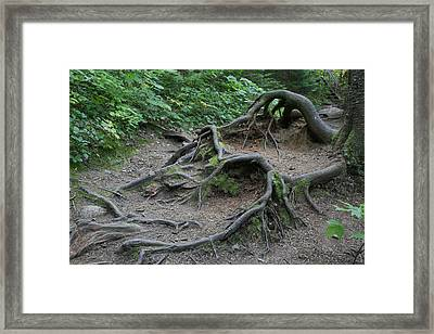 The Reach Framed Print by Alan Rutherford