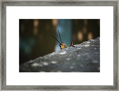 The Real Hopper Framed Print