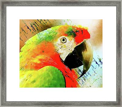 The Real Macaw Framed Print by Georgiana Romanovna