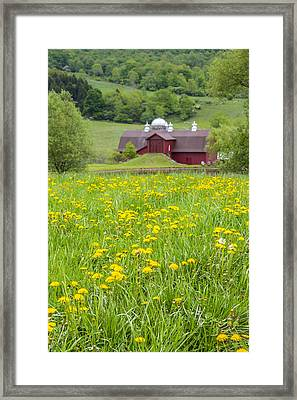 Framed Print featuring the photograph The Red Barn And Dandelions by Paula Porterfield-Izzo