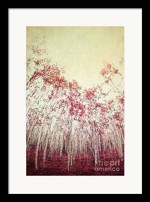 Shades Of Red Photographs Framed Prints