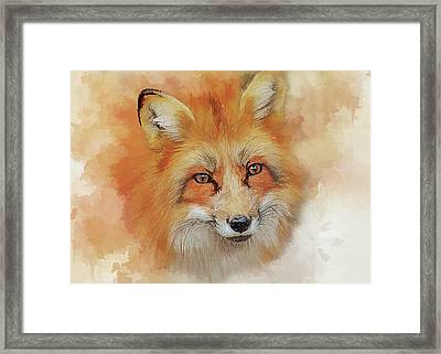 The Red Fox Framed Print